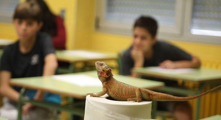 Visita del reptiliario en el instituto